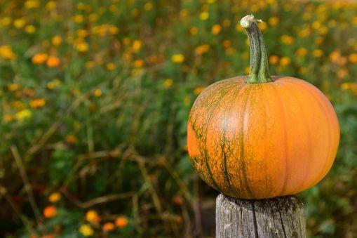 pumpkin-1710278__480.jpg